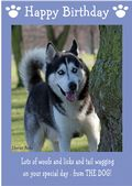 "Siberian Husky-Happy Birthday - ""From The Dog"" Theme"